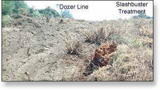 "Dozer fireline supplemented with a ""SLASHBUSTER"" treatment."