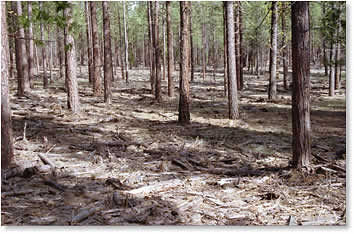 Forest fuels reduction unburned area