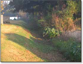 Before picture showing drainage overgrown with brush