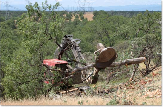 slashbuster mounted on timbco moving tree on slope with material handler