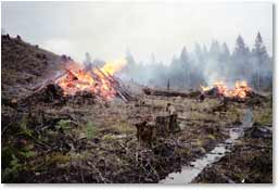 Burning piles of slash  with compacted and scarified soil in foreground