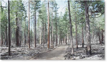 Forest fuels reduction treatment